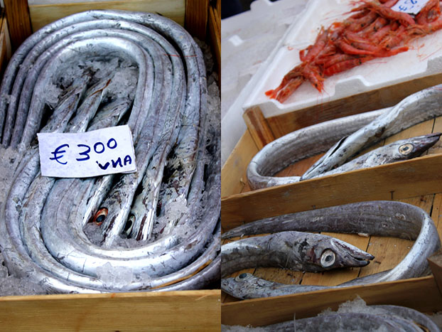 Long silvery fish in box