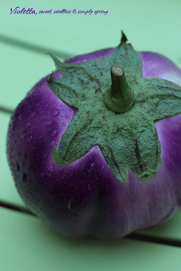 Aubergine or eggplant  'Violetta'